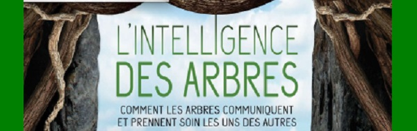 Intelligence des arbres